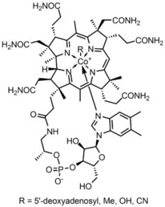 Molecular structure of B12