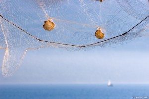 the net that holds you from opportunity