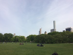 Sheep Meadow. Taken by Jenna Remley.